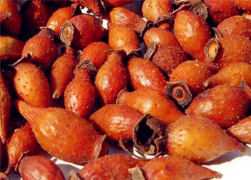 市场上的金樱子价格多少钱一斤?种植前景如何?